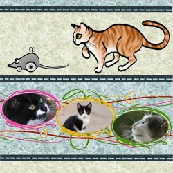 "Scrapbook template ""Cats #01"" in ""Pets"""