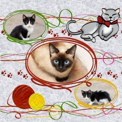 "Scrapbook template ""Cats #03"" in ""Pets"""