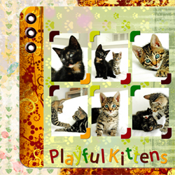 "Scrapbook template ""Cats Day #14"" in ""Pets"""