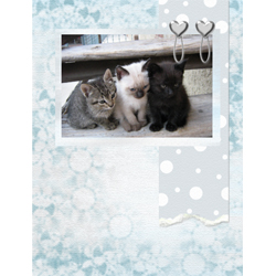 "Scrapbook template ""Silver Dreams #15"" in ""Silver Dreams"""