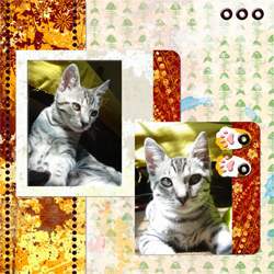 "Scrapbook template ""Cats Day #12"" in ""Pets"""